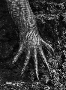 Salgado's Iguana Hand